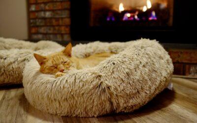 Kattesenge – komfort til din kat